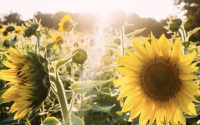 Attitude of Gratitude: Living a Mindful Life